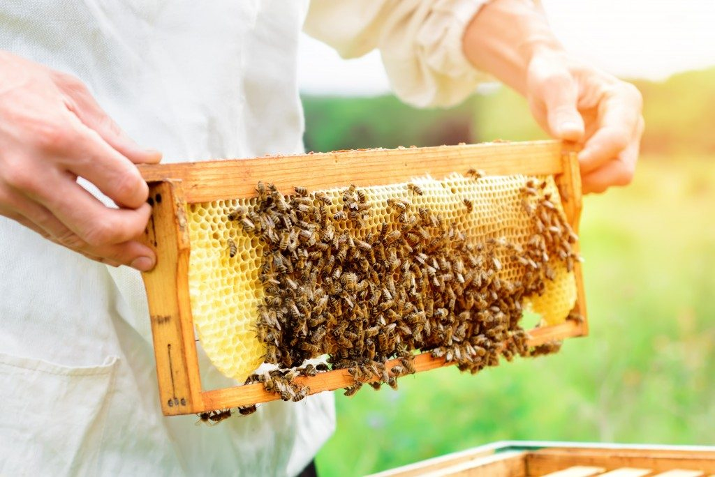 guy holding swarm of bees