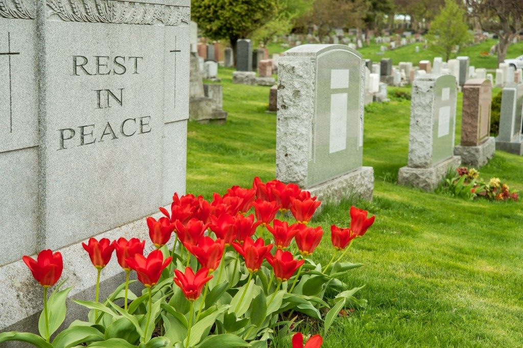 headstones in a cemetery with red tulips