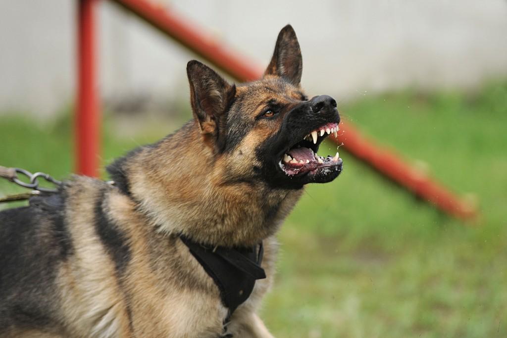 aggressive dog barking